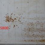 Das Gemüll von unterschiedlich starken Bienenvölkern_Seite_59