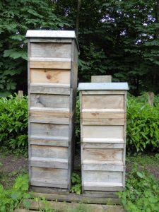 Bienenvölker im Juni