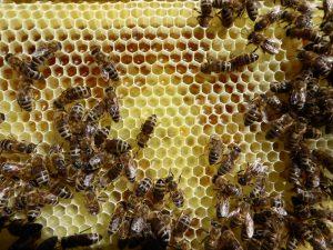 Dunkler Honig