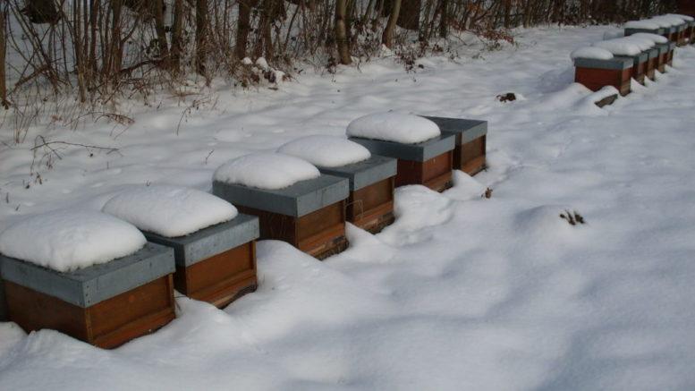 Ableger im Schnee