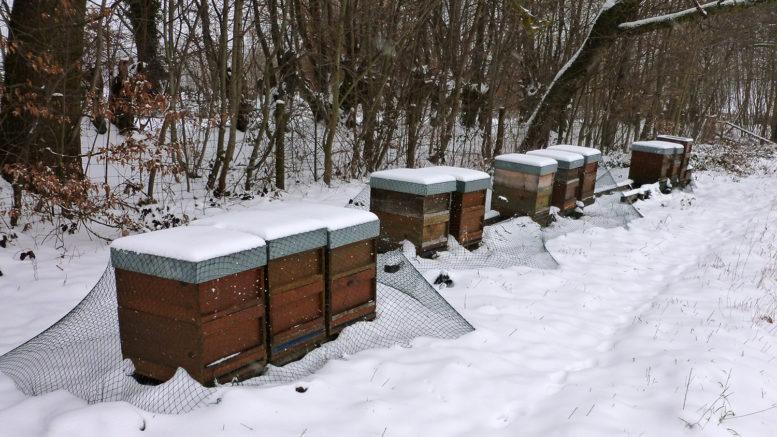 Bienenvölker im Schnee